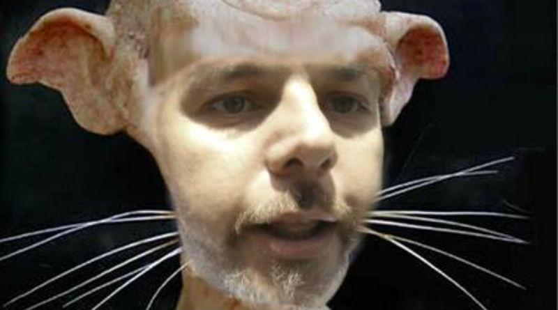 Nivel de ratas en Alicante