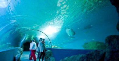 La sorprendente solución del tripartito para la accesibilidad del acuario
