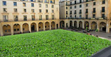 La Plaza del Ayuntamiento se convierte en una plantación de remolacha