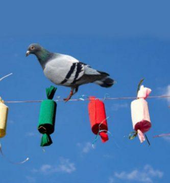 Guanyar pide multar a las pirotecnias de las mascletàs por espantar a las palomas