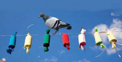 Guanyar multa espantar palomas