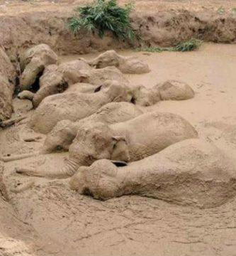Los zoológicos se blindan ante la visita a Alicante del Rey emérito