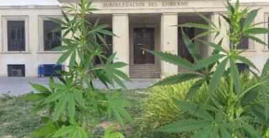 marihuana en la Plaza de la Montañeta