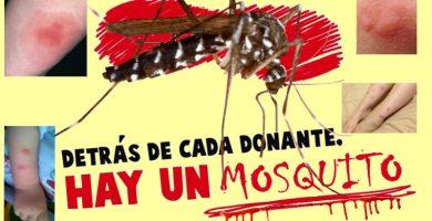 picaduras de mosquitos en Alicante