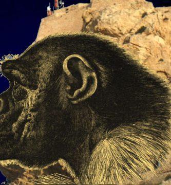 Cara del Mono
