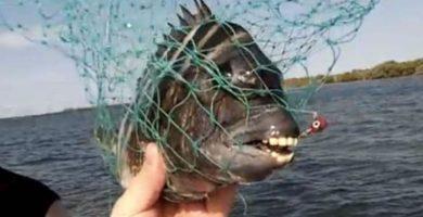 pez elche moro